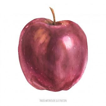 水彩の赤いリンゴ