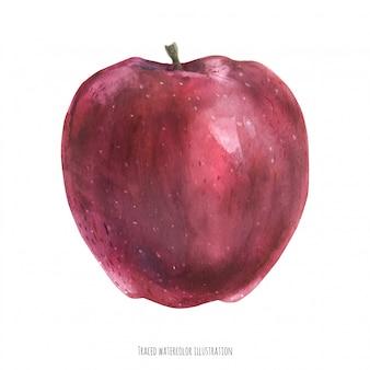 Сладкое большое красное яблоко