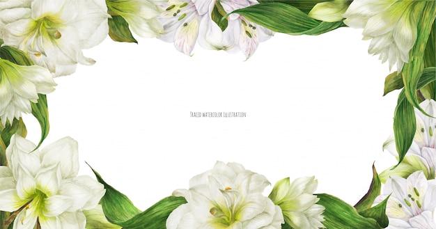 Цветочный фон с белыми цветами альстромерии и гиппеаструма
