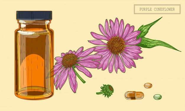 Лечебная эхинацея цветы и флакон