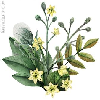 野生植物の手描きの水彩画ブートニア