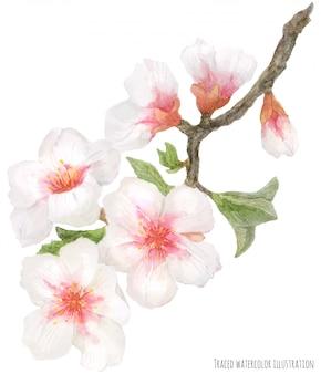 開花アーモンドの枝