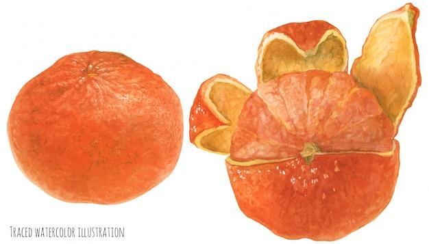 オレンジ色のマンダリンフルーツ