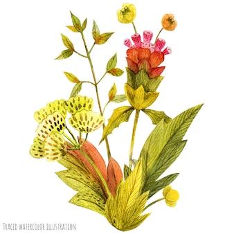Бутоньерка из луговых дикорастущих растений