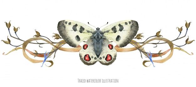 蝶アポロと植物のビネット