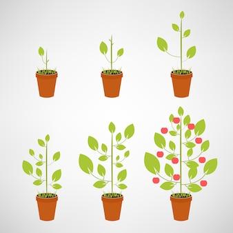 成長しているツリーアイコンセット