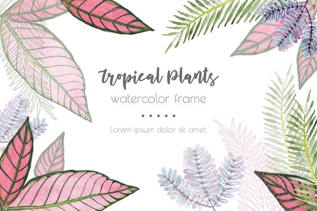 熱帯植物の水彩画フレームの背景