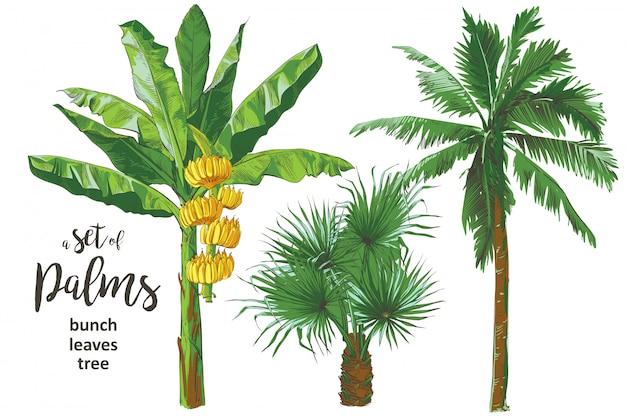 ベクトル熱帯バナナ手のひらテクスチャシームレスパターン。