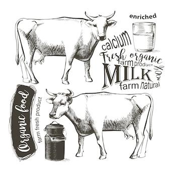 グラフィックビンテージスタイルの牛、手描きのベクター画像。