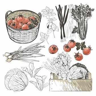 新鮮な野菜やハーブがいっぱい入った木箱
