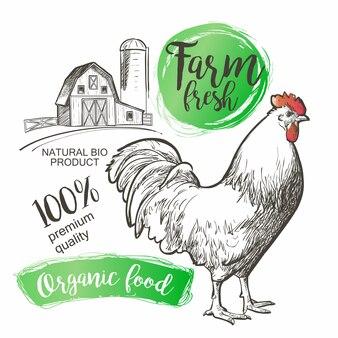 雄鶏雄鶏おんどりと農場。ビンテージスタイルのベクトル図です。