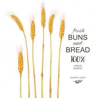 Колосья пшеницы. сбор зерновых, сельское хозяйство, органическое земледелие