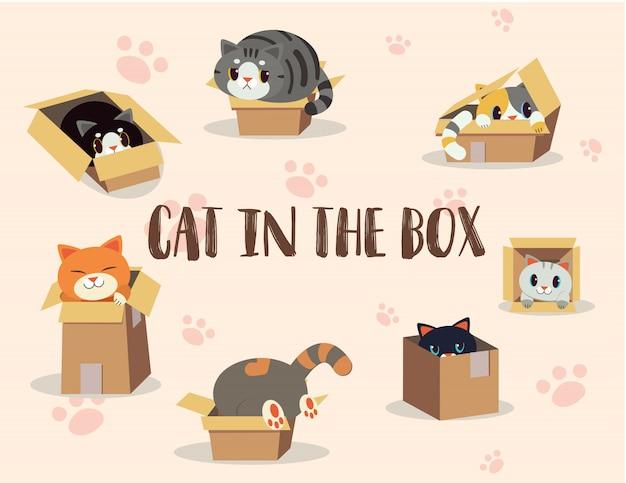 ボックスセットの中の猫