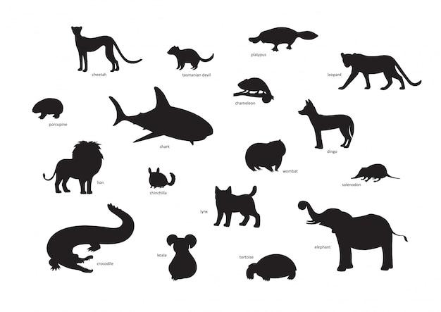 イラスト、漫画動物のシルエットのセット。チーター、タスマニアデビル、カモノハシ、ヒョウ、ヤマアラシ、サメ、カメレオン、ディンゴ、ライオン、チンチラ、ウォンバット、ソレノドン