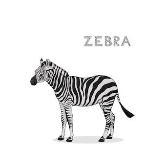分離された漫画シマウマ。動物のアルファベット。
