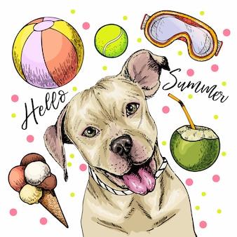 ピット・ブルテリア犬のベクトルの肖像。こんにちは夏の漫画イラスト。