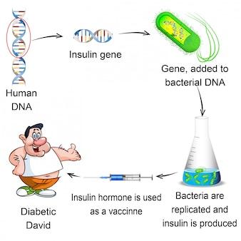 生物学 - 糖尿病患者とその治療法