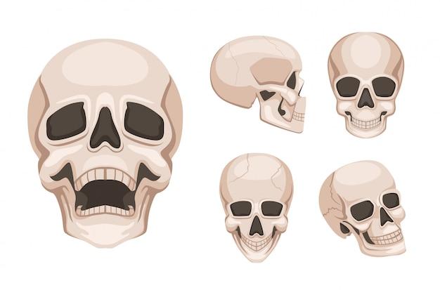 さまざまな側で人間の頭蓋骨。