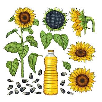 Векторные изображения продуктов природы. различные стороны подсолнечника
