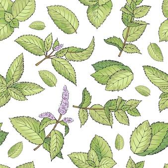 新鮮なミントの緑の葉。シームレスパターンベクトル。ミントのシームレスなグリーンリーフパターン図