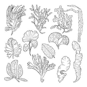 さまざまな水中植物と海洋スケッチ