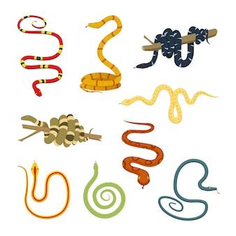 着色された爬虫類の写真。毒ヘビ