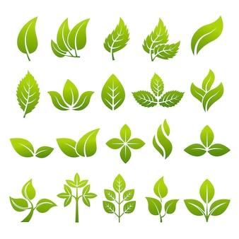 ロゴをデザインする様式化された植物