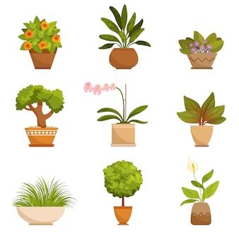 室内の観葉植物、装飾用の花。
