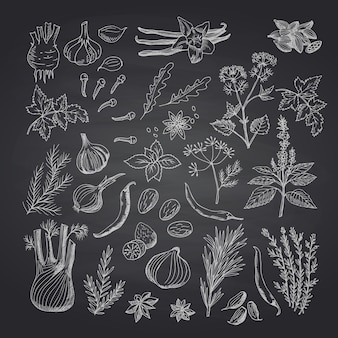 Вектор рисованной травы и специи на черной доске набор