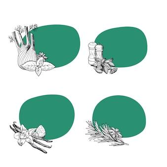 ベクターの手描きハーブと緑の背景を持つスパイス