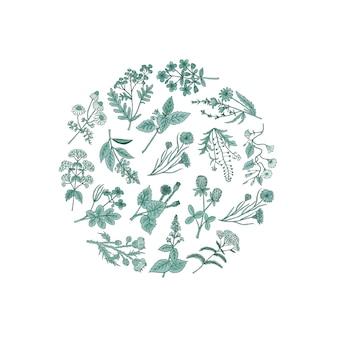 Рисованной лекарственные травы в форме круга