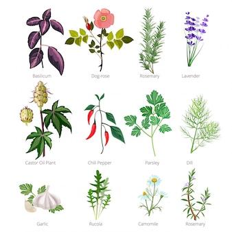 Еда трав и специй, здоровые натуральные продукты и различные травы и цветы валерианы роза фармацевтическая