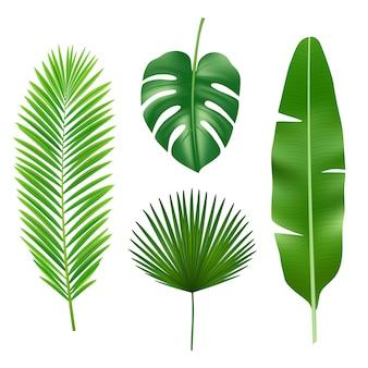 Тропические листья. джунгли зеленое растение природа реалистичный элемент