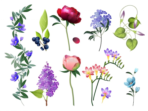 花のコレクション。葉を持つ結婚式の花ベクトル色の花植物写真セット