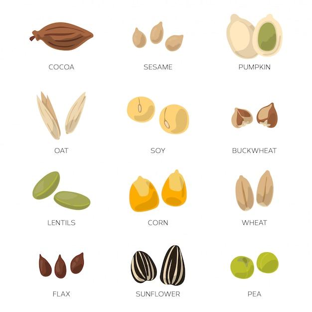 Различные семена изолировать на белом фоне