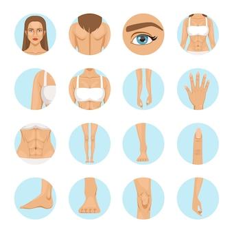 女性の体の部分