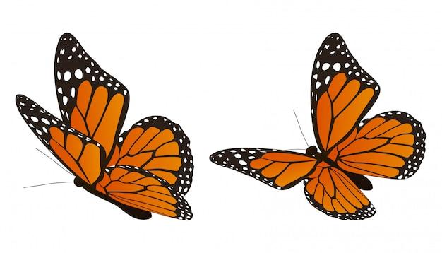 モナーク蝶のベクトル図