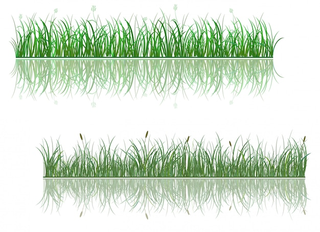 反射と緑の草の境界線
