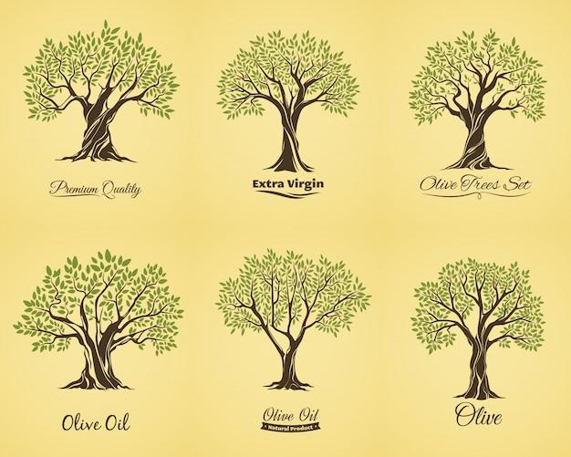 Силуэты оливкового дерева с листьями и ветвями
