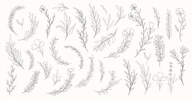 植物自然手描きセット。コレクション植物要素。エレガントなビンテージスタイル。