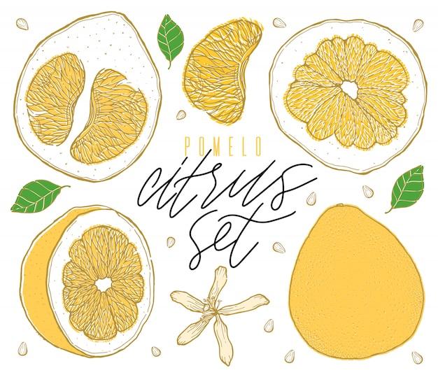 Набор красочных рисованной помело фруктов