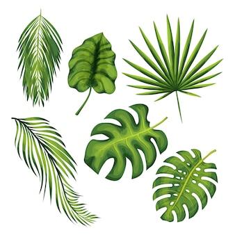 エキゾチックなジャングルの植物はベクトルイラストセットを残します。ヤシの木、バナナ、シダ、モンステラの枝の孤立した図面