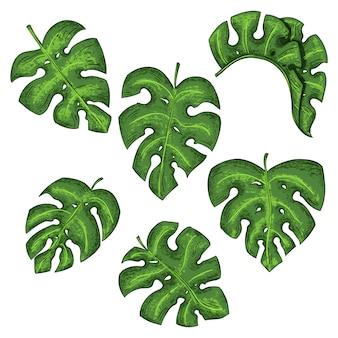 熱帯の葉のコレクション。