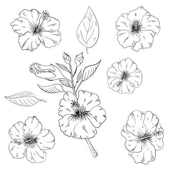 ハイビスカスの花の熱帯の花を設定します。ワイルドスプリングリーフワイルドフラワーが分離されました。黒と白の刻印インキアート。孤立したハイビスカスの図