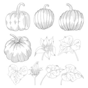 孤立した手描きオブジェクトのスライスと葉。