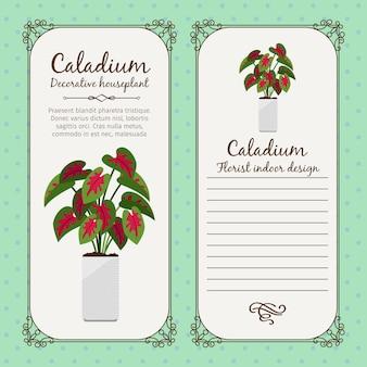 カラジウム植物とビンテージラベル