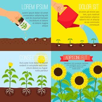 植栽プロセスインフォグラフィック