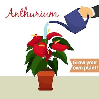 手散水アンスリウム植物