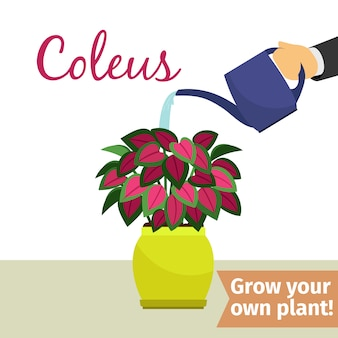手散水コリウス植物