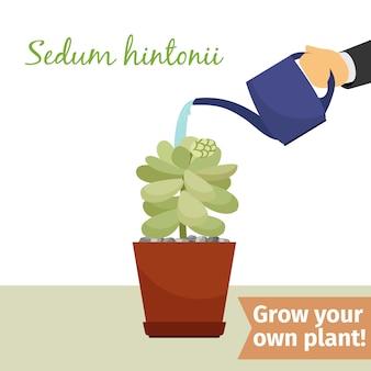 手散水セダムヒントニー植物